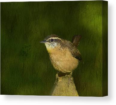 South Carolina State Bird Canvas Prints