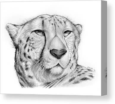 Cheetah Drawings Canvas Prints