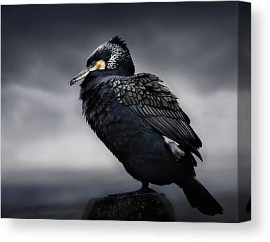Cormorant Canvas Prints