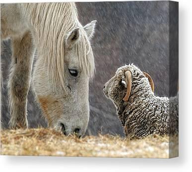 Animal Mother Canvas Prints