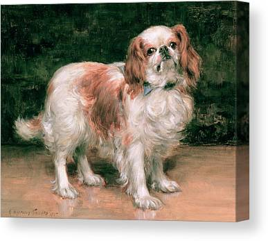 Toy Dogs Canvas Prints