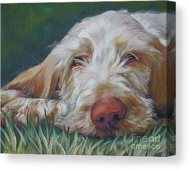 Spinone Canvas Prints