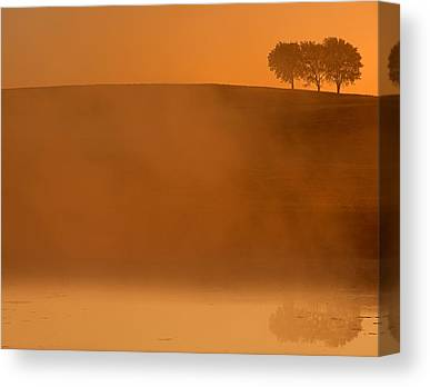 Tree In Golden Light Canvas Prints