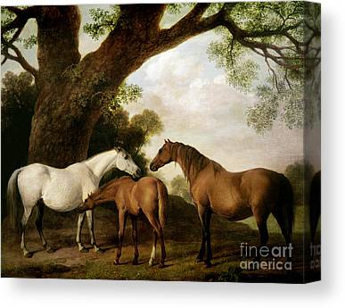 Brown Horse Canvas Prints