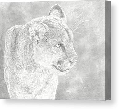 Mountain Lion Drawings Canvas Prints
