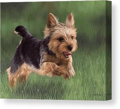 Yorkshire Terrier Canvas Prints