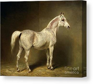 Grey Horse Paintings Canvas Prints