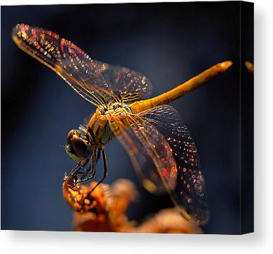 Bokeh Canvas Prints
