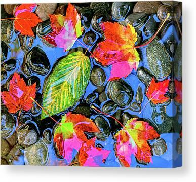 Fallen Leaf On Water Photographs Canvas Prints