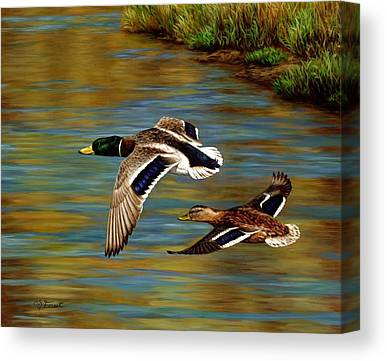 Waterfowl Canvas Prints