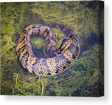 Swamp Rattlers Canvas Prints