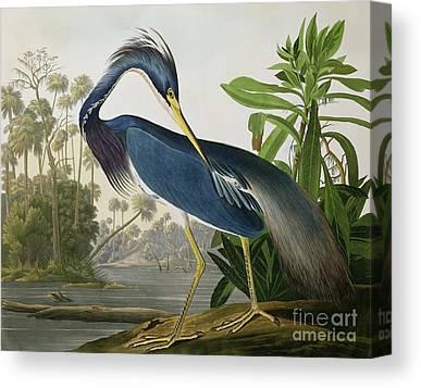 John James Audubon Canvas Prints