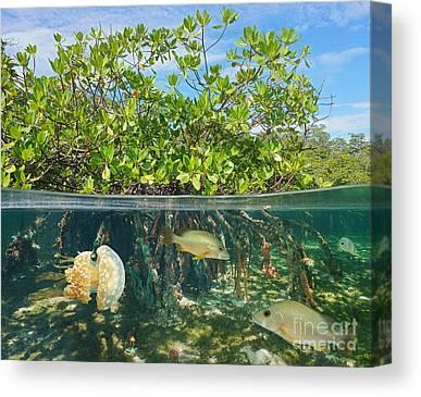 Aquatic Vegetation Canvas Prints