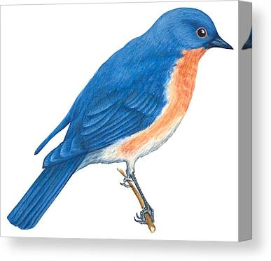 Bluebird Drawings Canvas Prints
