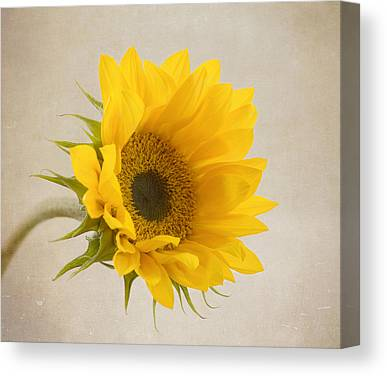 Yellow Sunflower Petals Canvas Prints
