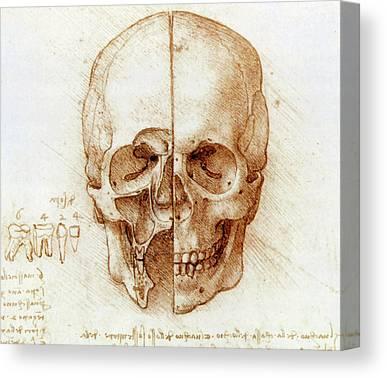 Maxillary Sinus Art | Fine Art America