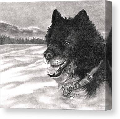 Sled Dog Drawings Canvas Prints