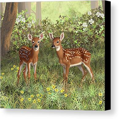White-tailed Deer Limited Time Promotions