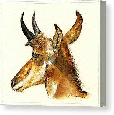 Pronghorn Antelope Canvas Prints