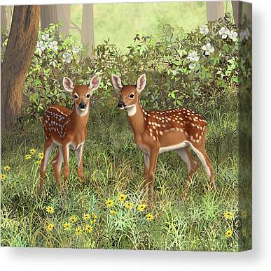 Twin Fawns Canvas Prints