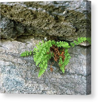 Pteridophyte Canvas Prints