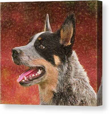 Cattle Dog Mixed Media Canvas Prints