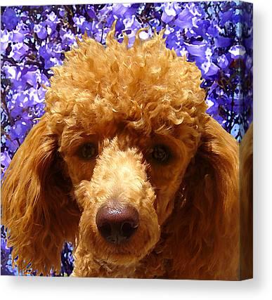 Poodle Canvas Prints