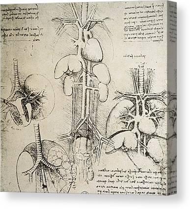 Internal Organs Canvas Prints