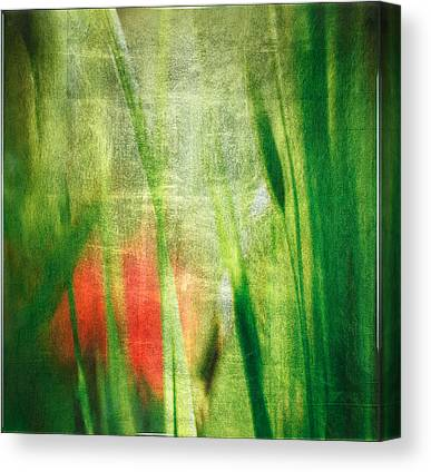Silver Grass Mixed Media Canvas Prints