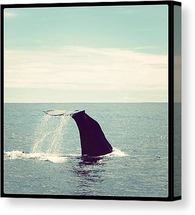 Sperm Whales Canvas Prints