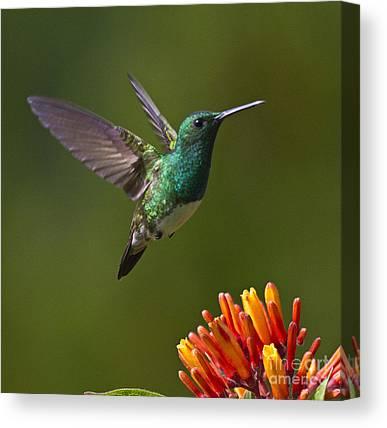 Bird Flight Canvas Prints