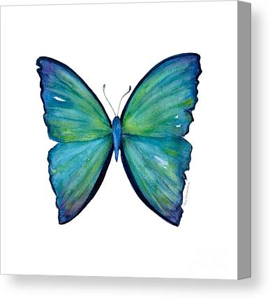 Insecta Canvas Prints