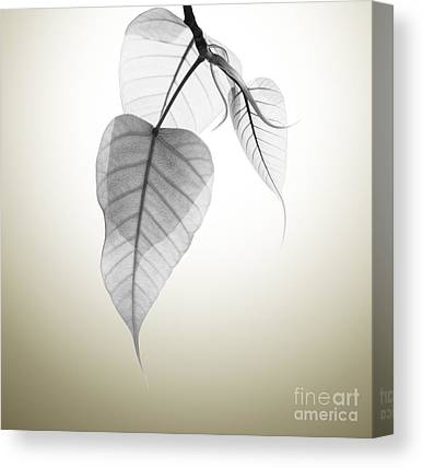 Sacred Canvas Prints