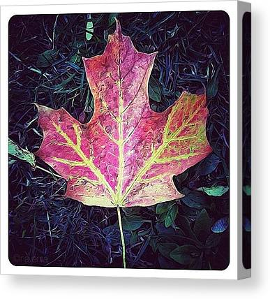 Ontario Canvas Prints