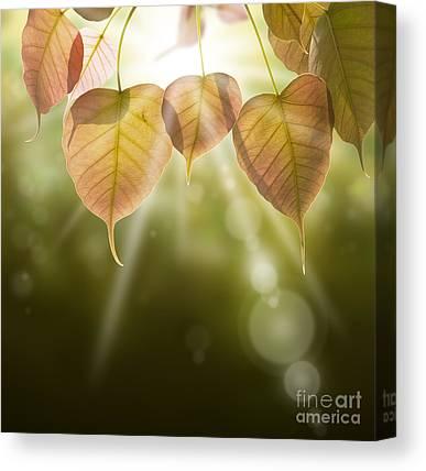 Forest Detail Canvas Prints
