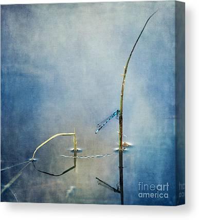 Odonata Canvas Prints