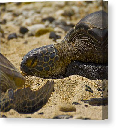 Sea Turtles Canvas Prints