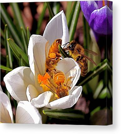 Fertilize Canvas Prints