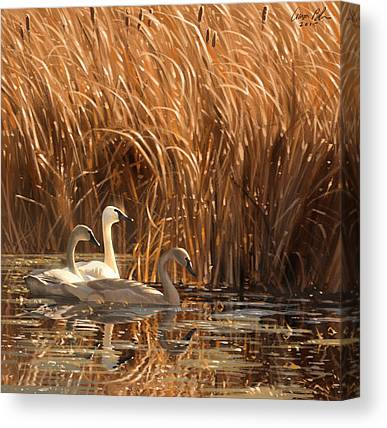Water Fowl Canvas Prints
