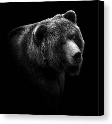 Black Bear Canvas Prints