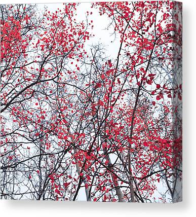 Red Leavies Photographs Canvas Prints