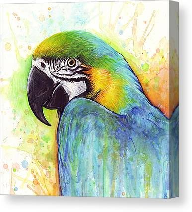 Macaw Canvas Prints