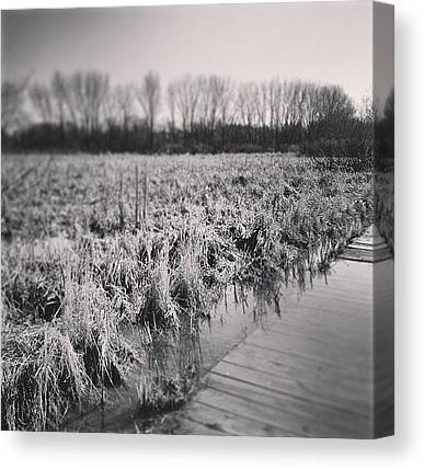 Swamps Canvas Prints