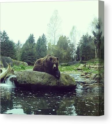 Grizzly Bears Canvas Prints