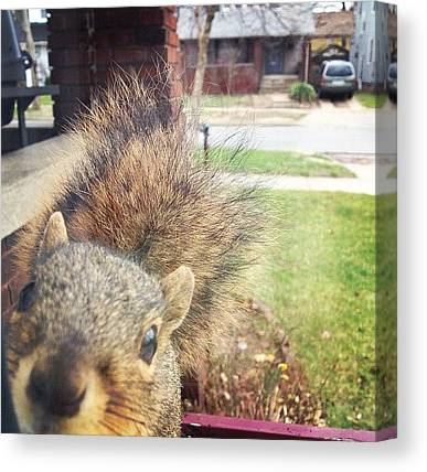 Squirrels Canvas Prints