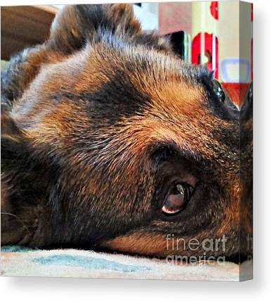 German Shepherds Canvas Prints