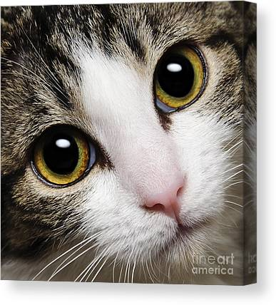 Andee Design Puss Canvas Prints