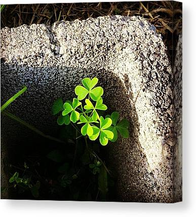 St. Patricks Day Canvas Prints