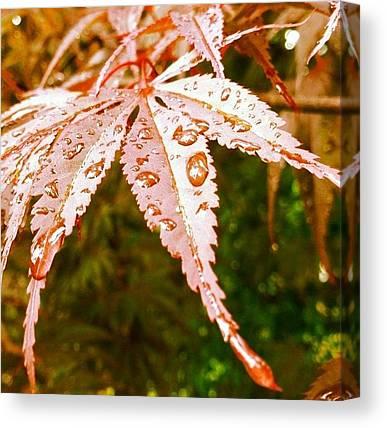 Raindrops Canvas Prints