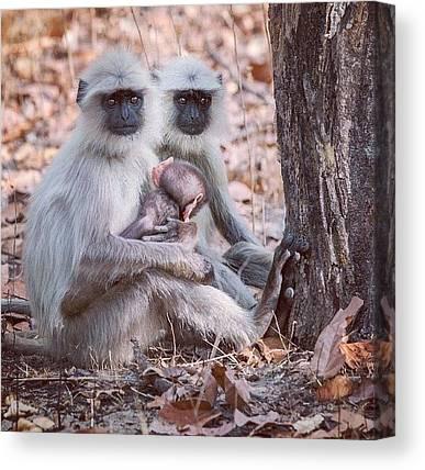 Primates Canvas Prints